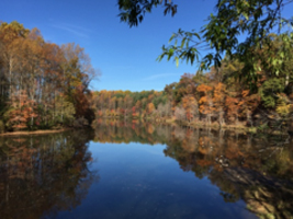 fall trees and blue sky with blue lake reflecting